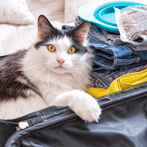 Mit der Katze reisen: Was beim Campen / im Wohnmobil zu beachten ist