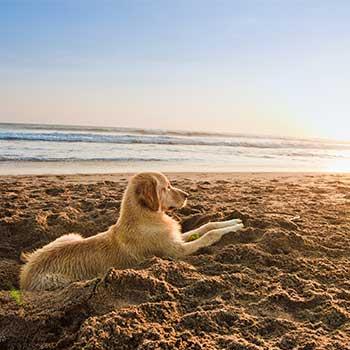 Tipps für eine stressfreie Reisezeit mit Hunden und Katzen