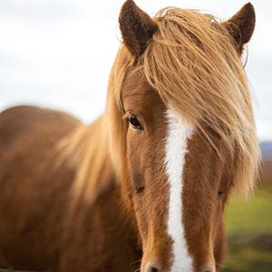 Fellwechsel beim Pferd - Wie Du Dein Tier im Sommer und Winter unterstützen kannst