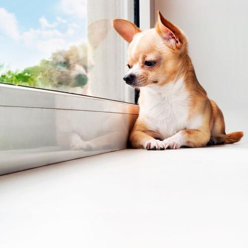 dog_alone_0