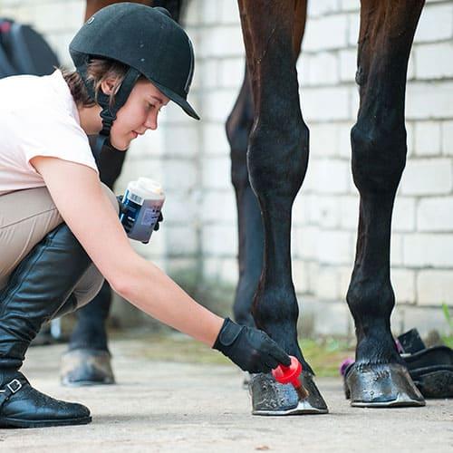 Der Pferdehuf Teil 2/2: Die häufigsten Hufkrankheiten