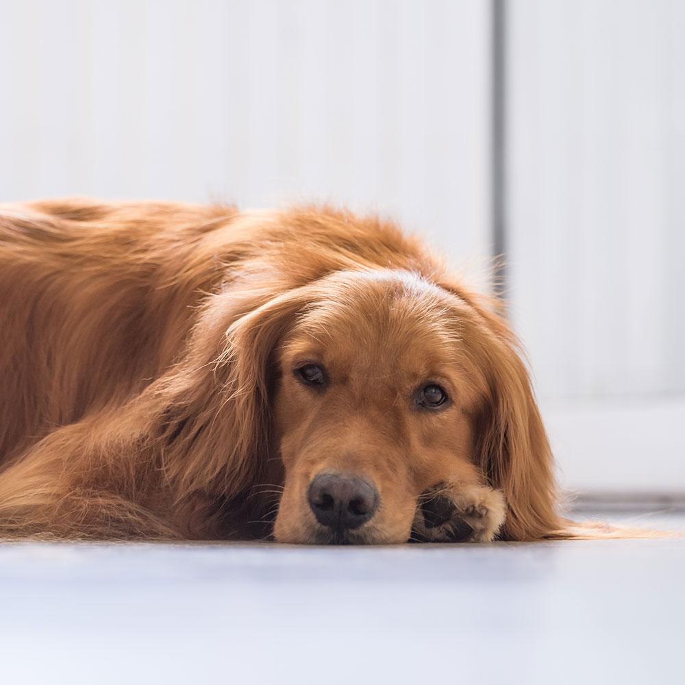 Information: Corona-Virus bei Haustieren