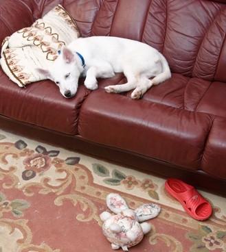 Hund-alleine-zuhause