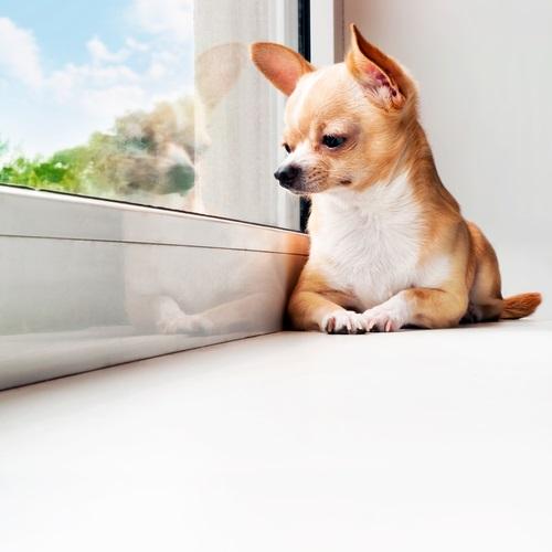 Hunde alleine zu Haus - Alles eine Frage der Übung