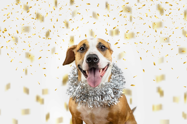 Silvester mit Hund: 10 Tipps für einen entspannten Jahreswechsel
