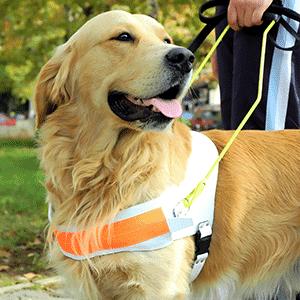 Der Blindenhund – Was muss er können? Was kostet er? Welche Rasse eignet sich?