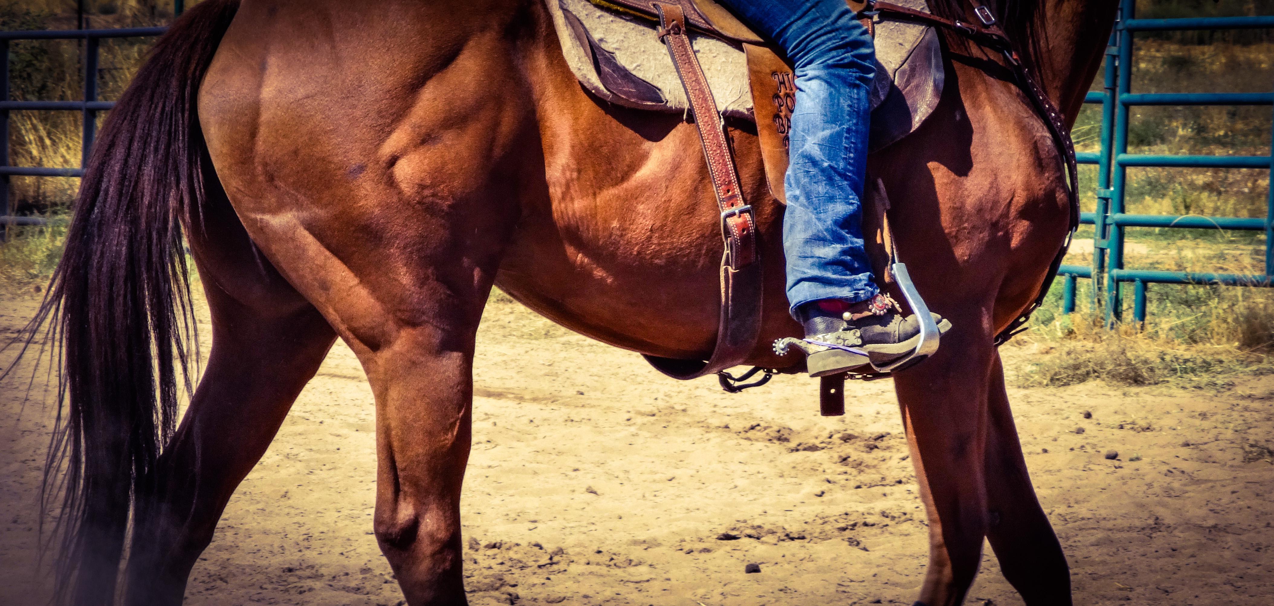Muskelaufbau beim Pferd – das müssen Sie wissen