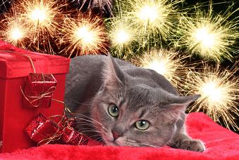 Angstfreies Silvester für Ihre Katze