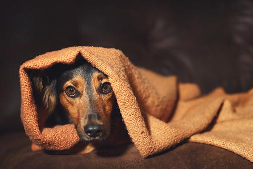 Hund-Angst-versteckt-sich-vor-Gewitter