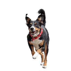 Gesunde Gelenke bei Hund und Katze: Welches Futter das richtige ist und wie Du erkennst, dass Dein Tier Schmerzen hat