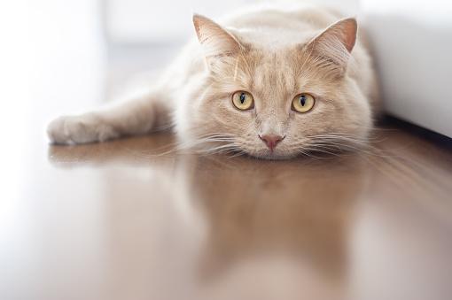 Meine Katze hat warme Ohren - muss ich zum Tierarzt
