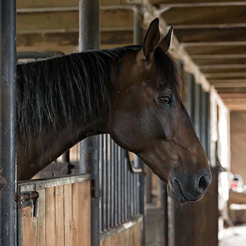 Coronavirus und Pferdesport: Die wichtigsten Fragen und Antworten