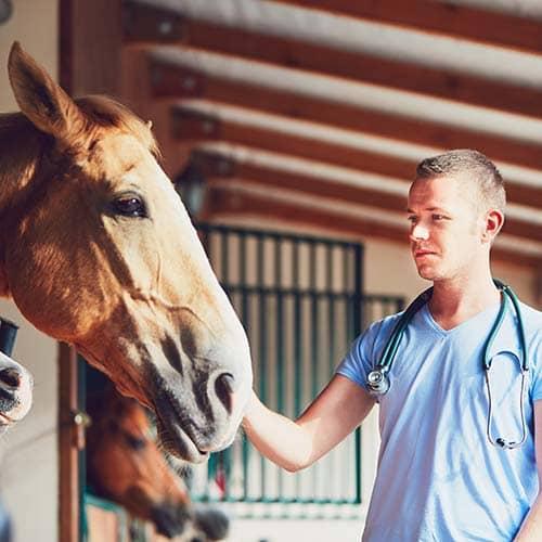 Die Bedeutung von Selen für das Pferd