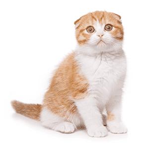 Ungewöhnliches Verhalten bei Hund und Katze erkennen und deuten, z.B. Stressreaktionen. Tierarzt ja oder nein?