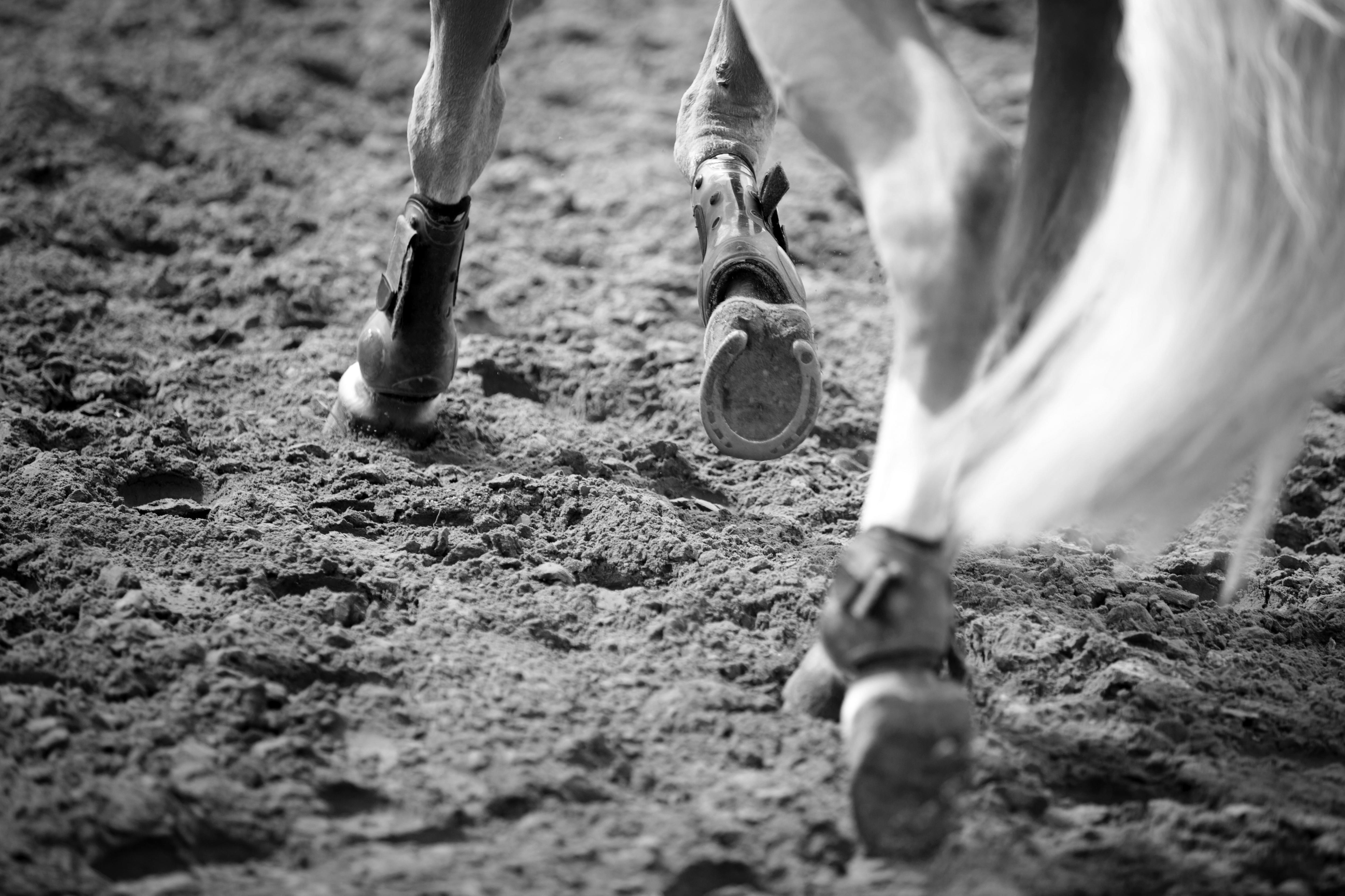Hufgesundheit beim Pferd