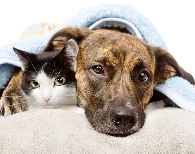 Dünnen Hund oder Katze aufpäppeln?