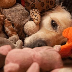 Scheinträchtigkeit / Scheinschwangerschaft: Was das ist und wie Du Deinem Hund oder Deiner Katze hilfst