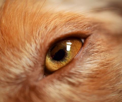 Pflege bei Augenproblemen bei Hunden und Katzen