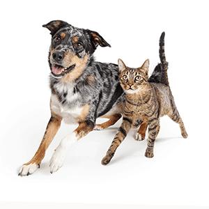 Diät bei der Katze und beim Hund