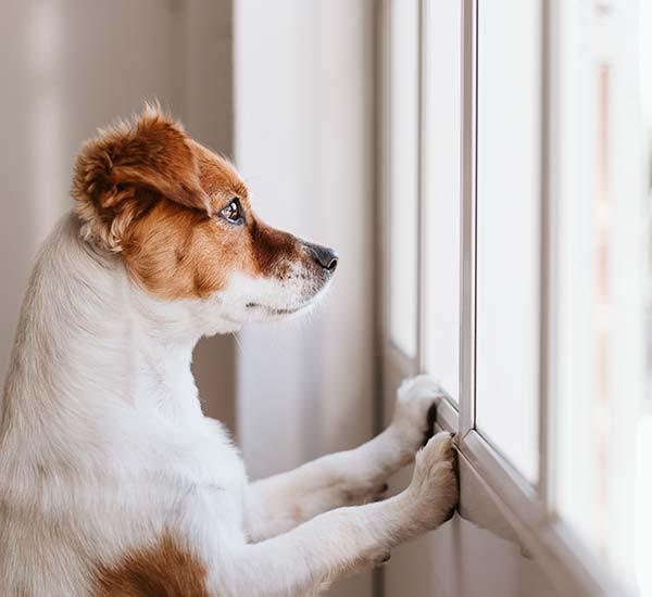 Hund-alleine-zuhause-lassen-3