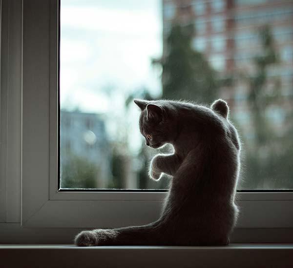 Die Katze alleine lassen: Gewöhne sie langsam daran