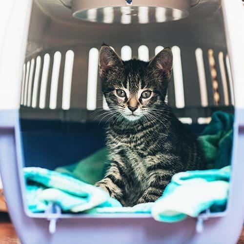 Katzentransportbox: Katze mit der idealen Box transportieren