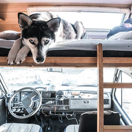 Camping mit Hund: Wohnmobil und Zelten, alle Tipps