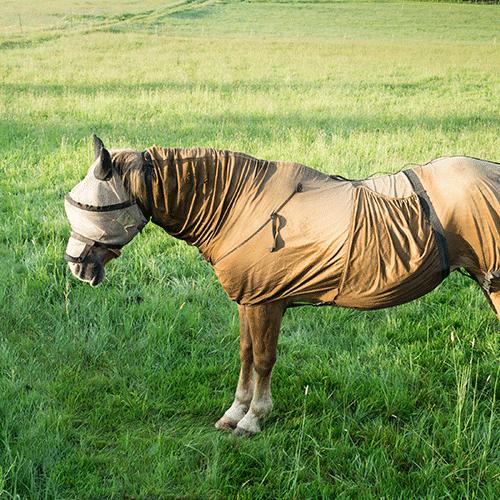Sommerekzem beim Pferd und wie Kerabol therapeutisch begleiten kann