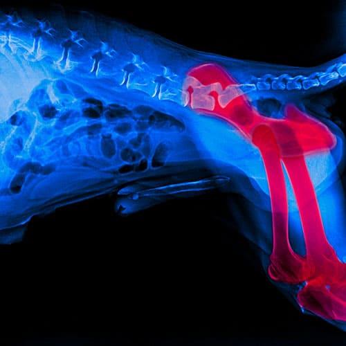 Ostearthrose beim Hund