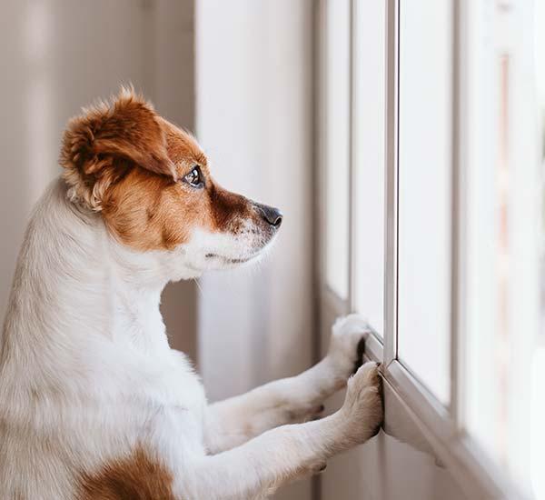Hund alleine lassen: Tipps, worauf du achten musst